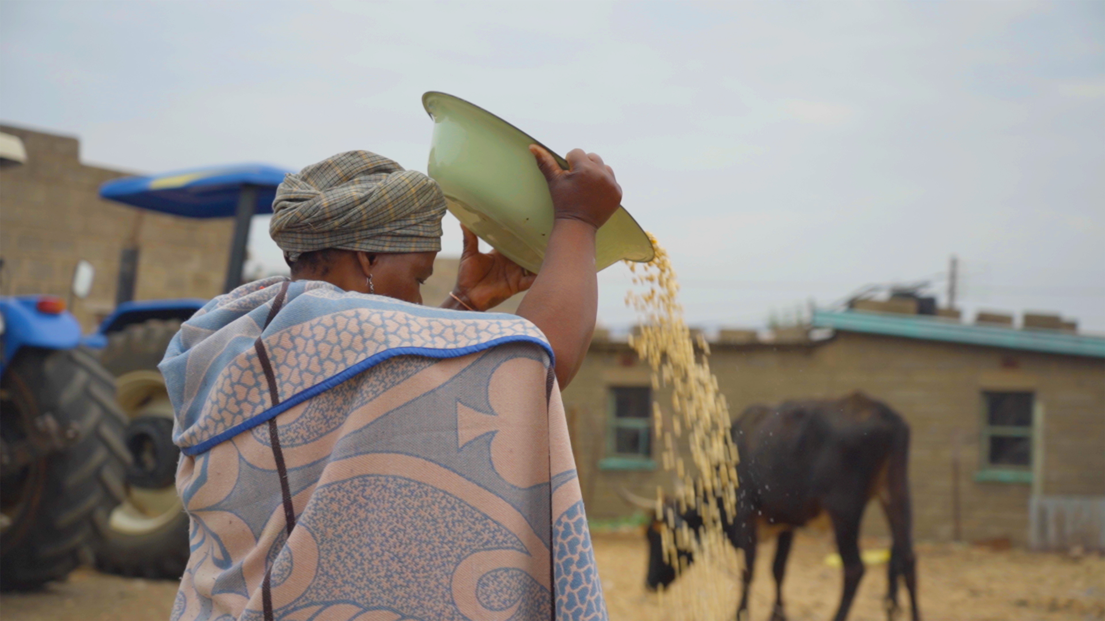 Posho client cleaning maize before milling process