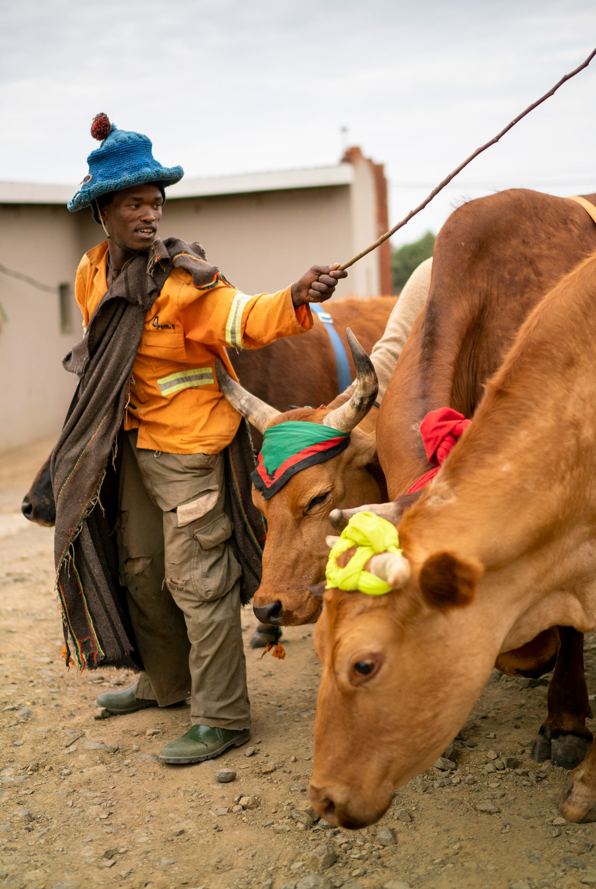 Posho client with cattle