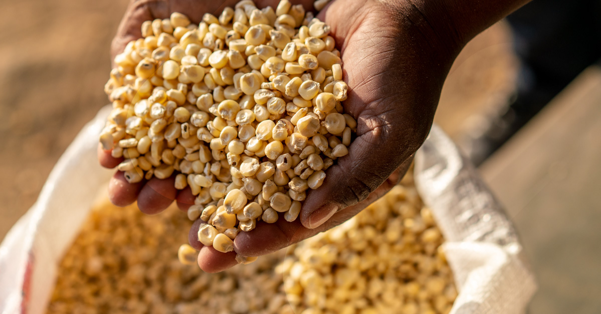 Posho-client-hands-with-maize-twitter
